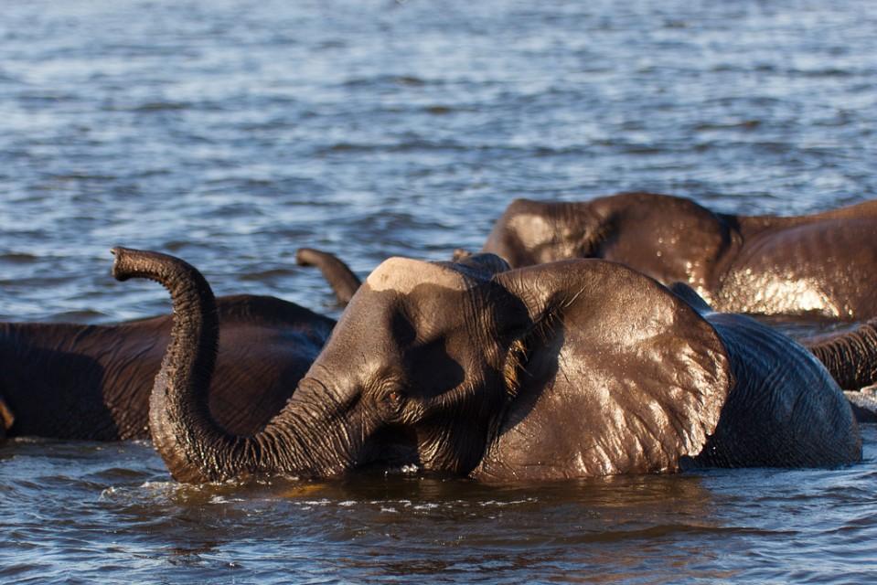 botswana group safari