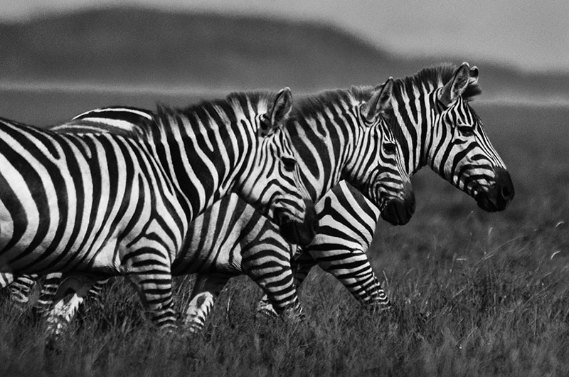 best tanzania safari photos