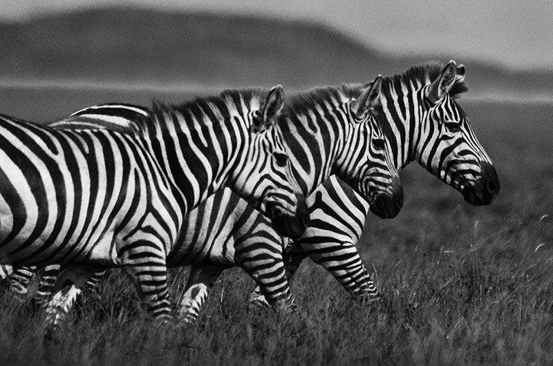 best tanzania safari photos