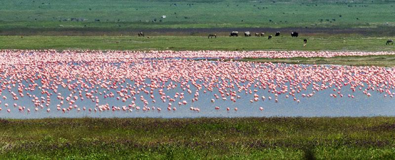 flamingo lake kenya