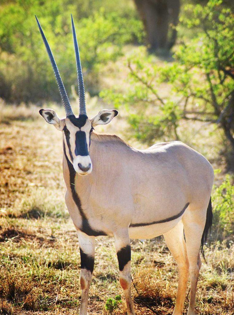 off the path kenya safari