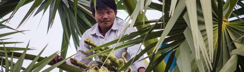 Palm Harvest