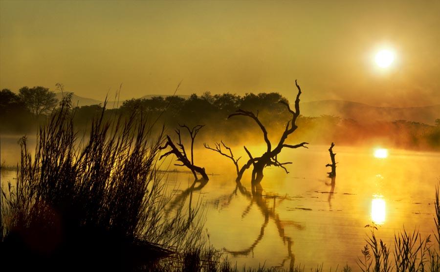 dead tree dawn WP