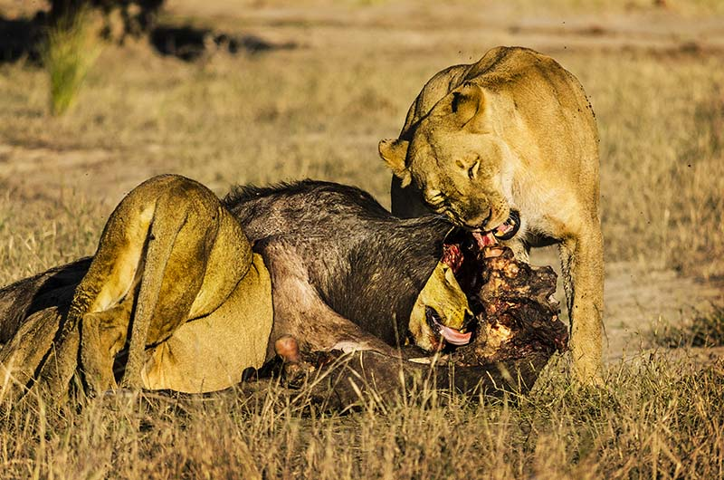 best small group safaris
