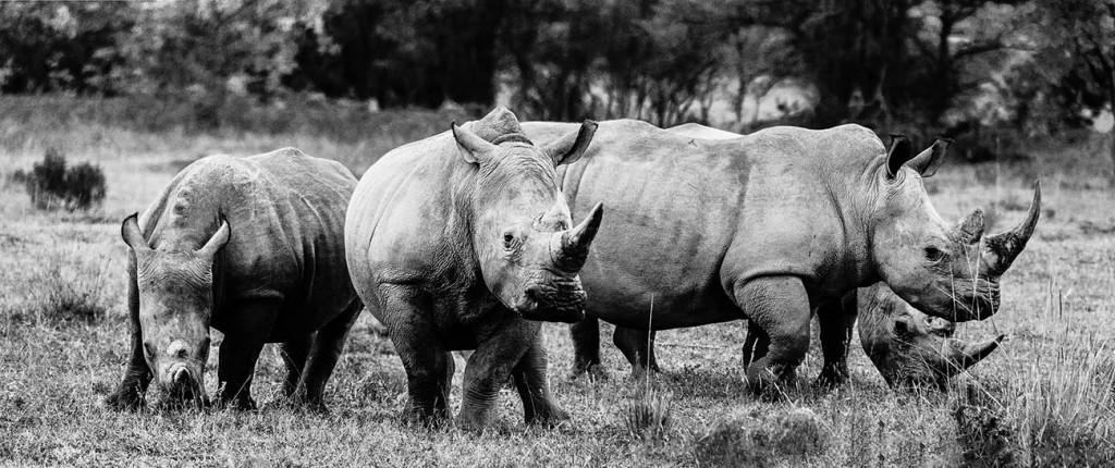 migration safaris kenya