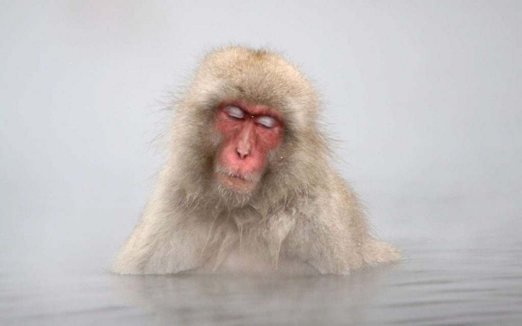 snow monkey tours japan