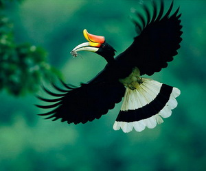 sumatra birds