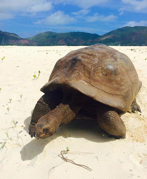 giant tortoise island