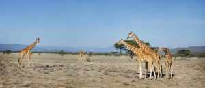 wildlife kenya safari