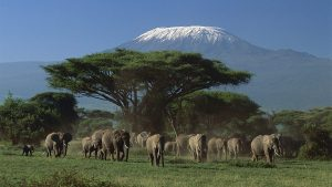 kenya group tours