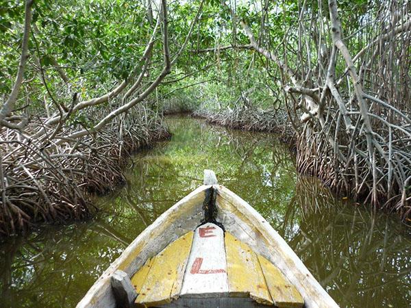 Boquilla Mangroves