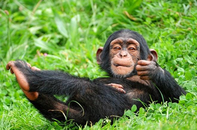 best uganda safaris
