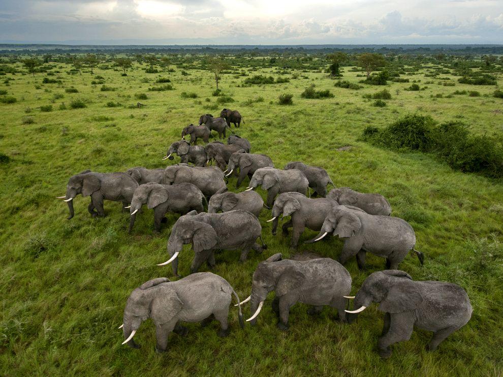 elephant safaris uganda