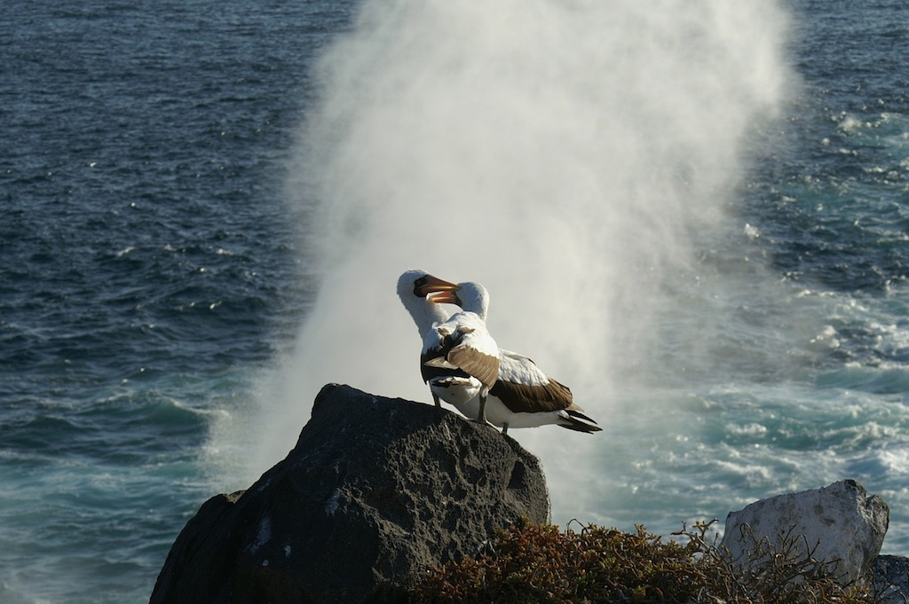 albatros visit galapagos