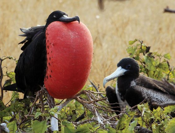 Frigate Bird Tours