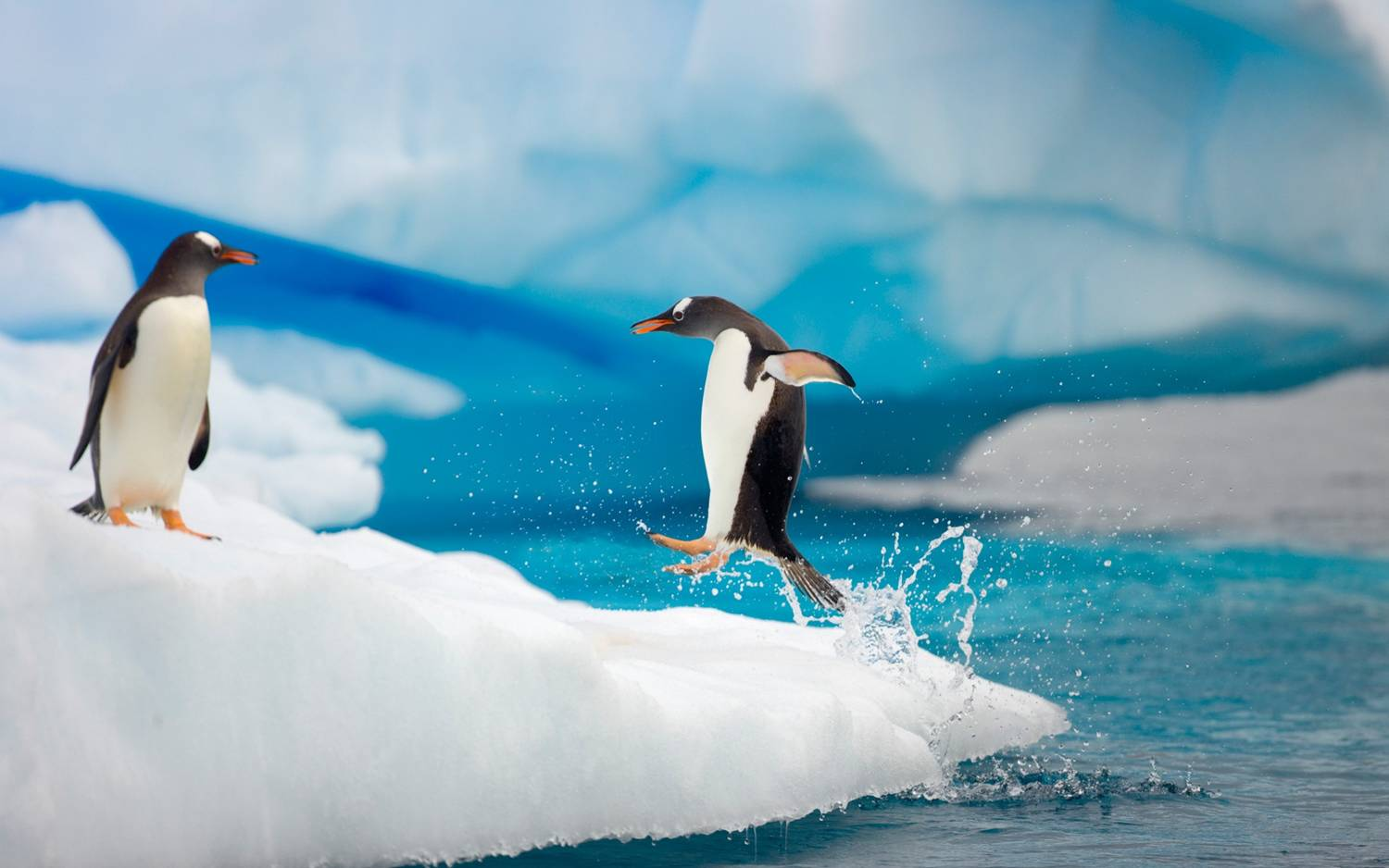 Antarctic Small Group Expeditions
