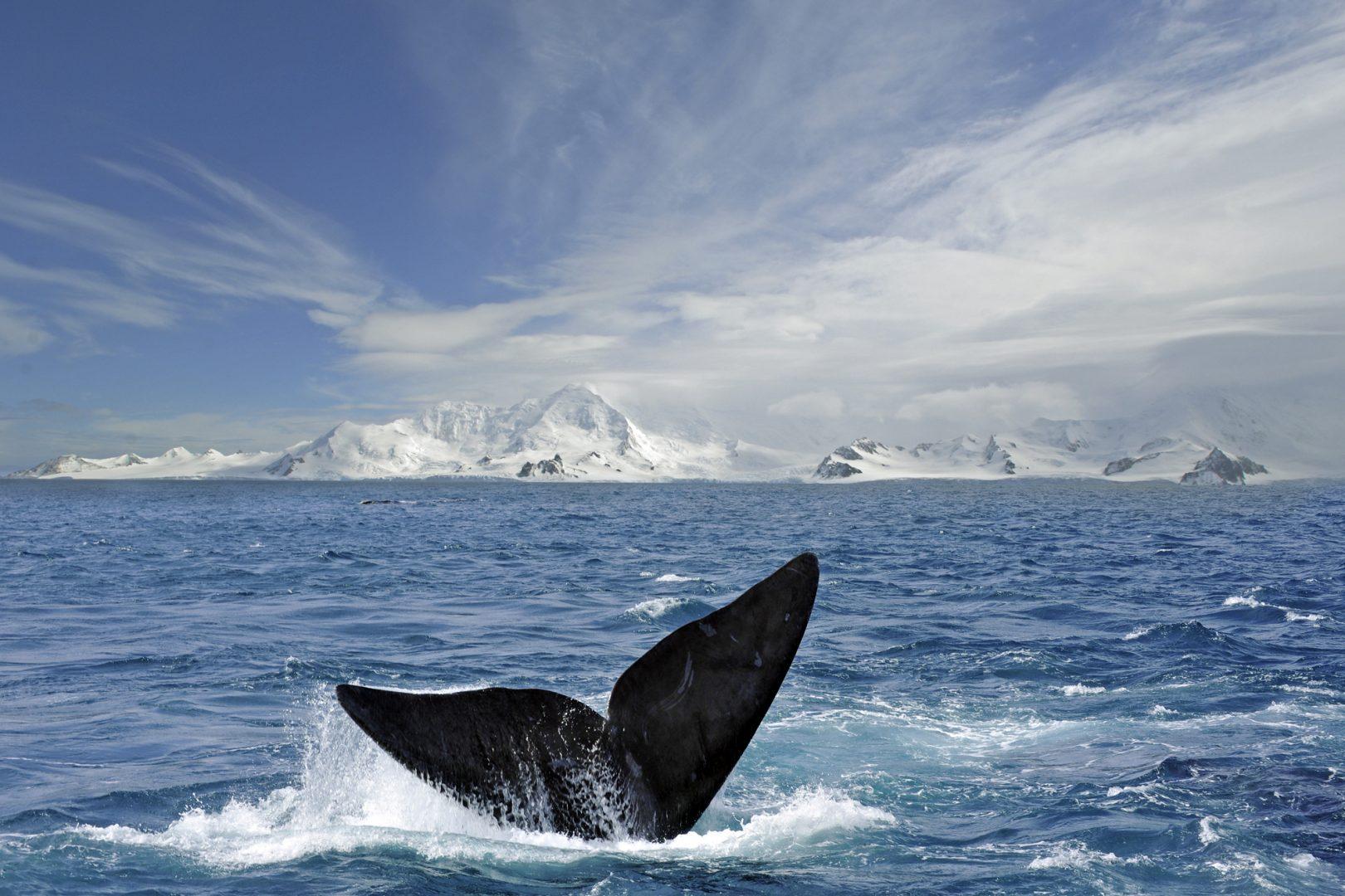 whale tours antarctica