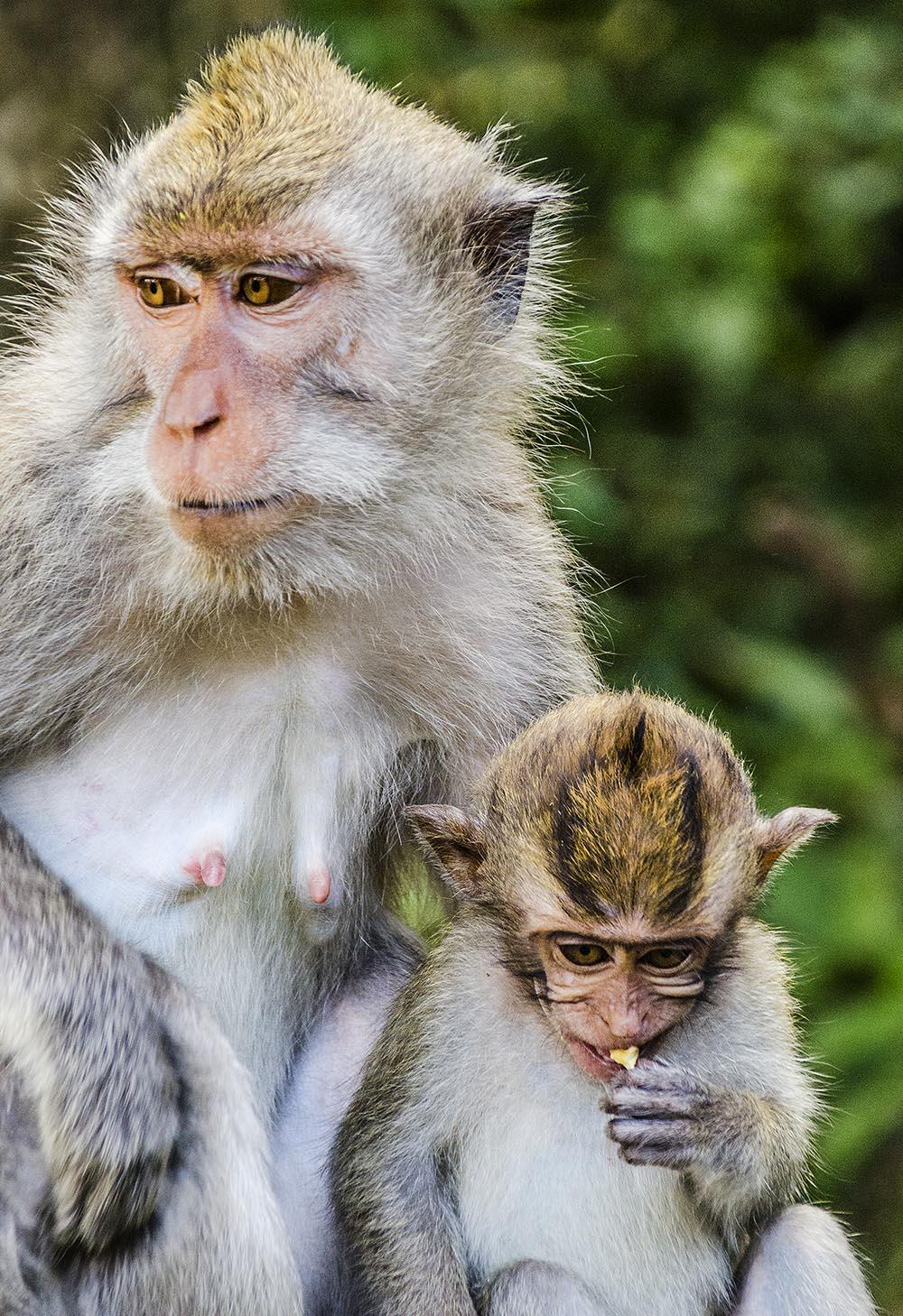 Monkey Forest Tours Bali