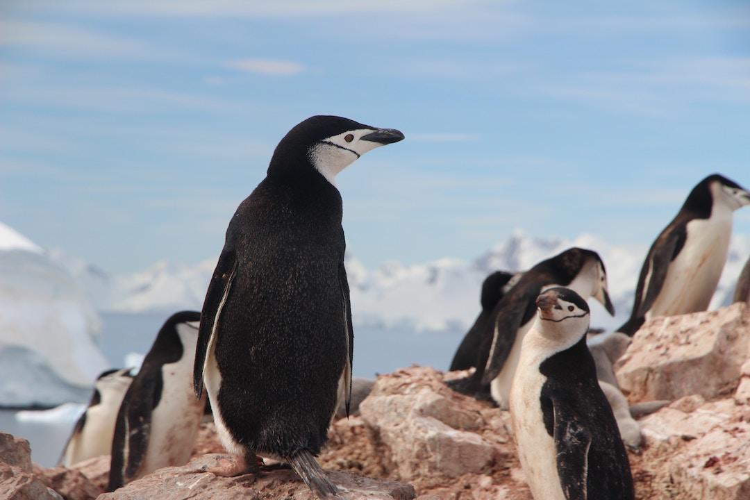 Antarctica Group Tours