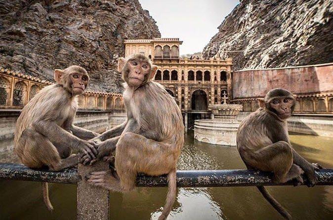 best monkey temple india