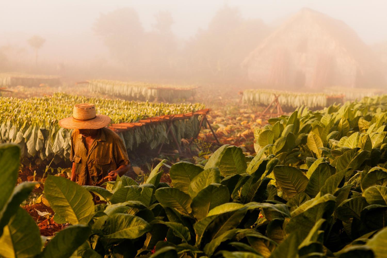 cuba tobacco farm tours
