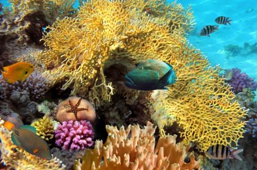 Bay of Pigs Snorkel