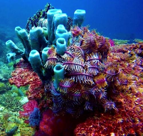 gaya best snorkeling
