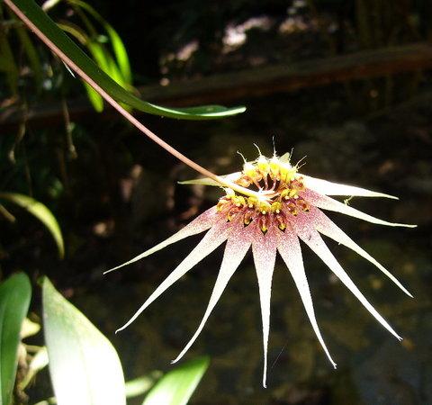 KK botanical gardens