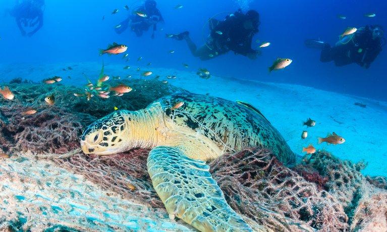 Gaya snorkeling tours