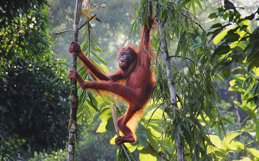 best borneo Rehabilitation Center