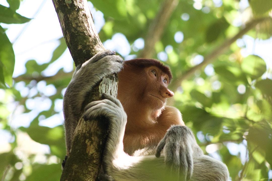 Borneo Group Tour