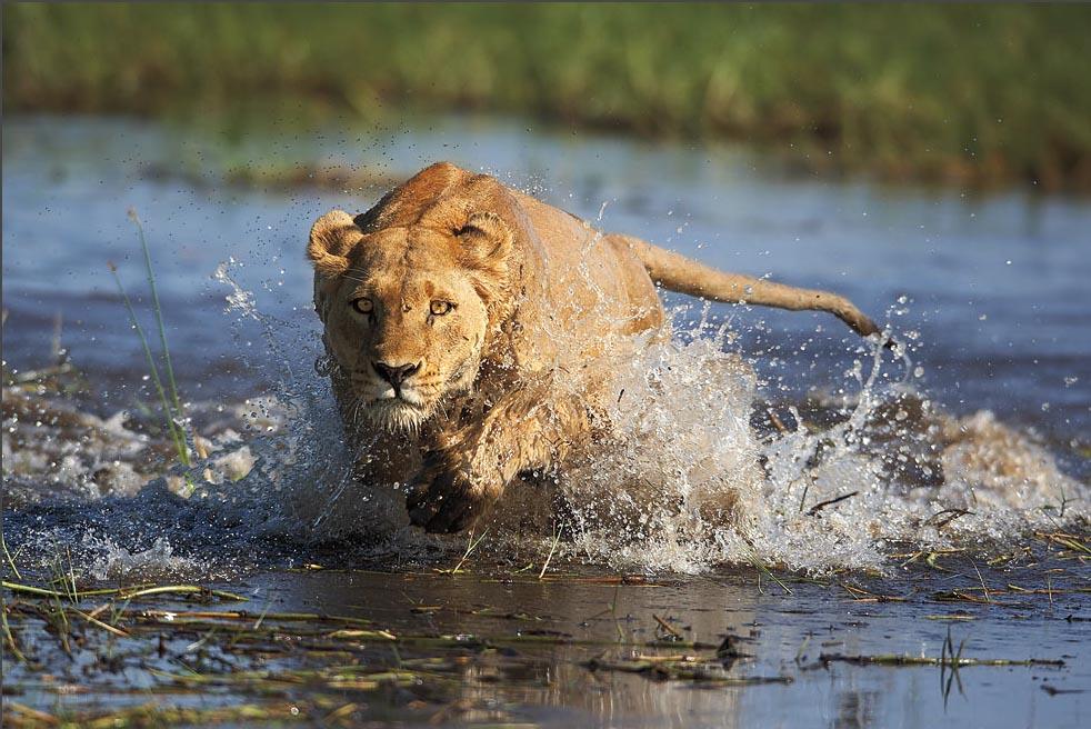Okavango group safaris