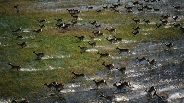 exclusive okavango safaris