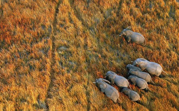 Botswana luxury safaris