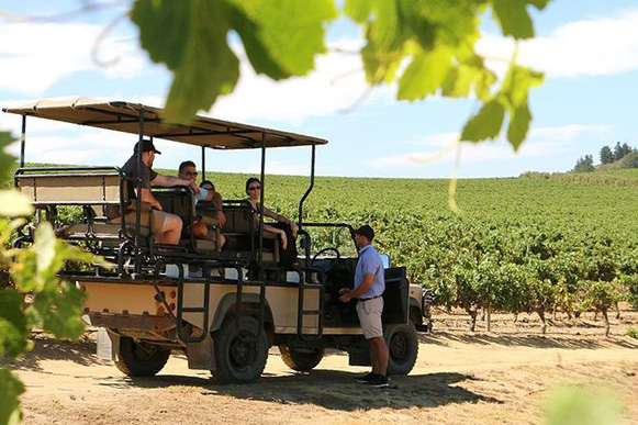 safari wine tours